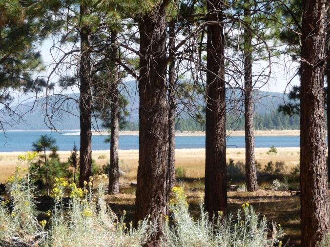 Eagle Lake through Trees