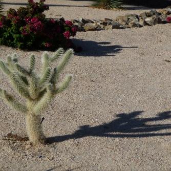 Cactus in Palm Springs yard