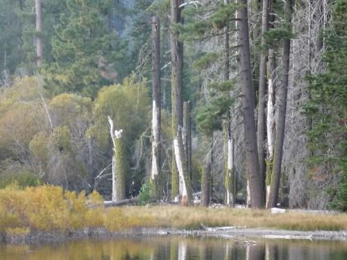 Lassen_Manzanita Lake_Shoreline_1