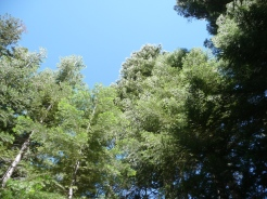 Twin Lakes_Trees_1