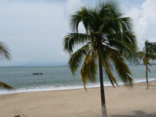 Puerto Vallarta_Palm Trees
