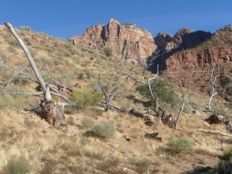 Zion_Watchman Campground_Fallen Trees_2