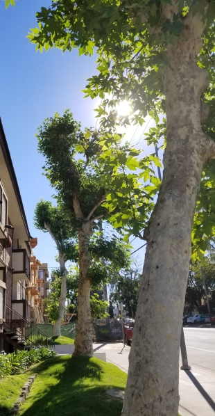 Trimmed Trees_1