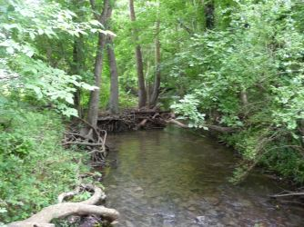 Spring Hill TN_Harvey Park_McCutcheon Creek_1