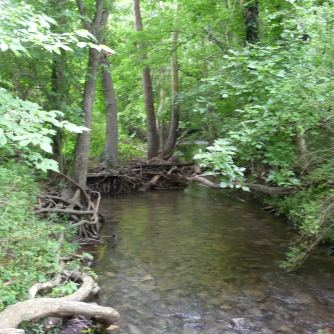 Spring Hill TN_Harvey Park_McCutcheon Creek_1