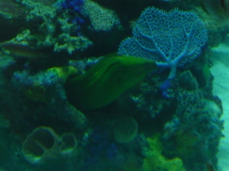 Las Vegas_Golden Nugget Casino Bar Aquarium_Eel_1