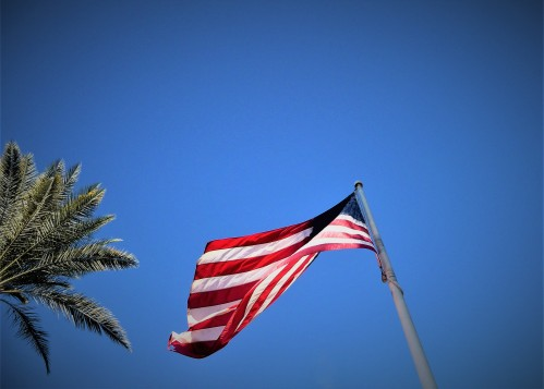 US Flag plus Palm Tree