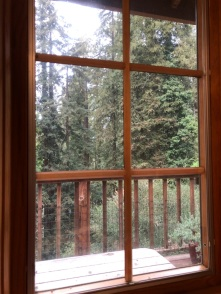 Redwoods Through Window_7