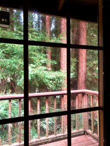 Redwoods Through Window_6