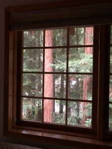 Redwoods Through Window_5