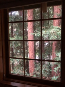 Redwoods Through Window_4