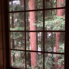 Redwoods Through Window_4