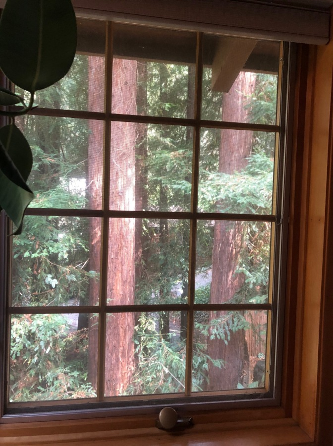 Redwoods Through Window_3