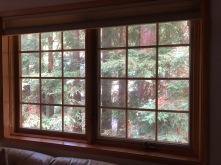 Redwoods Through Window_1
