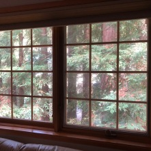 Redwoods Through Window_1