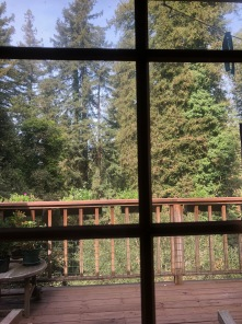 Redwoods Through Window_2