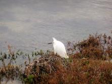 Posing Bird_1