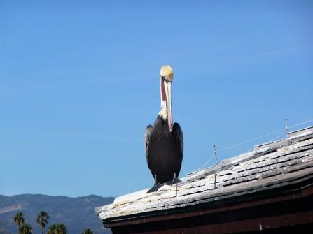 Posing Bird_3