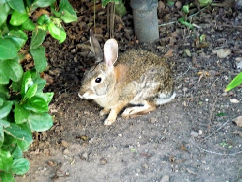 Posing Bunny