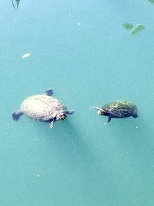 Posing Turtles_1