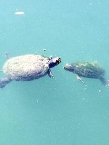 Posing Turtles_2
