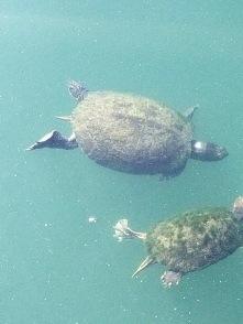 Posing Turtles_3