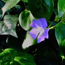 Spring Flowers_3