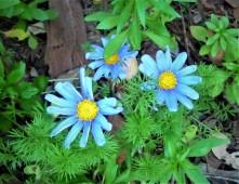 Spring Flowers_5
