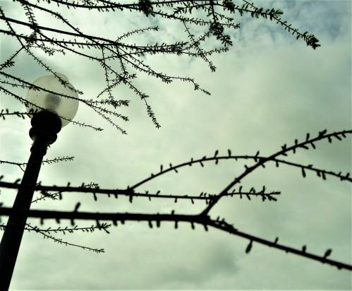 Spring Tree_1