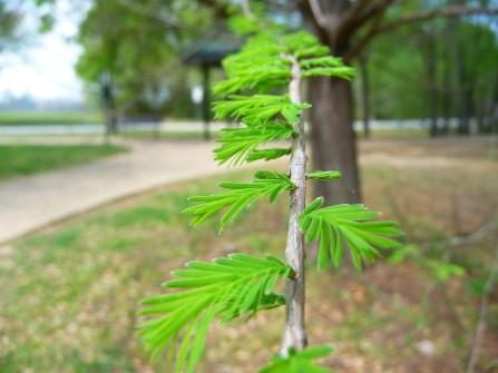 Spring Tree_3