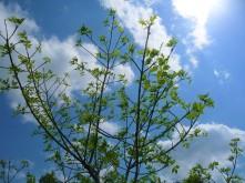 Spring Tree_5