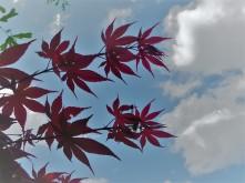 Spring Tree_6