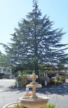 Tree_Present