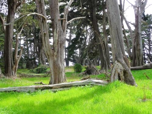 James V. Fitzgerald Marine Reserve_Cypress Grove_3