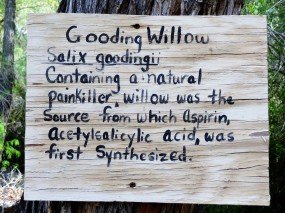 Gooding Willow Sign