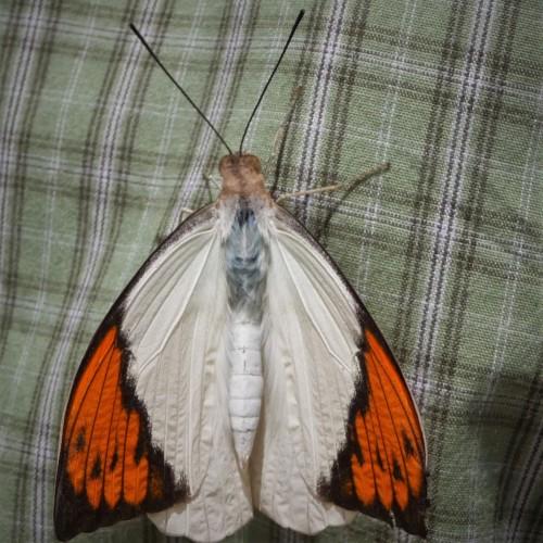 Motherfly