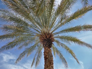 China Ranch_Palm Tree