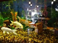 Fish Tank & Lobby