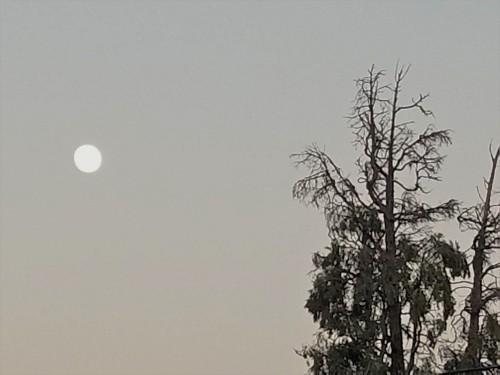 Moon Shadow_1