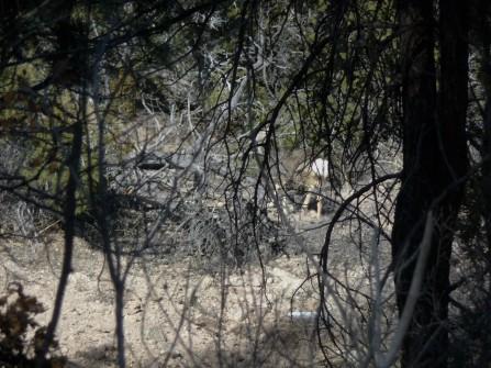 Deer Stalker_1