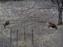 Deer Stalker_3