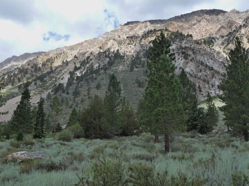 Mountain Meadow_2