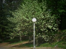 Plitvice National Park Lamppost