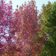 Fall Colors_2