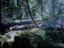 Arctic_Woods