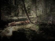 Burlesque_Woods