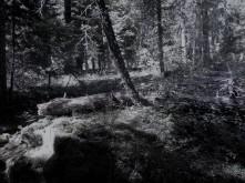 Denim_Woods