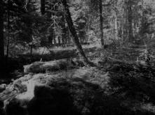 Mercury_Woods