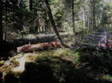 Napa_Woods