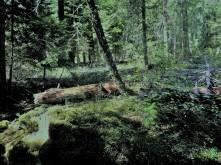 Neo_Woods
